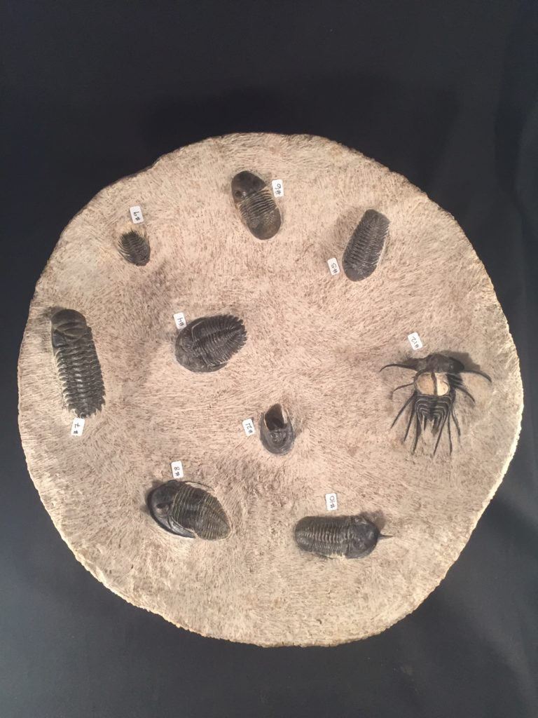 Enter the Earth: Trilobite Bowl